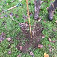 tree-planting04