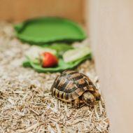 tortoise03